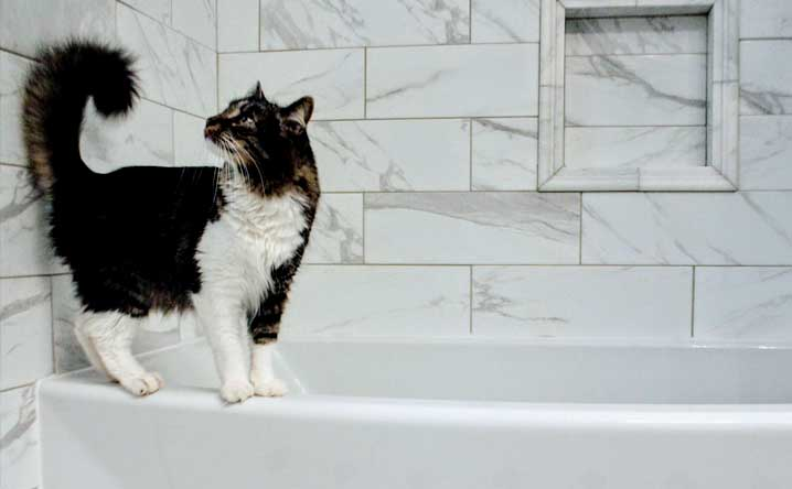 Is your cat peeing in the bathtub?