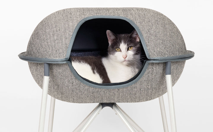 5 Types of Cat Beds We Recommend