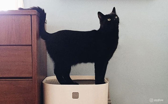 All the Reasons a Black Cat Brings Good Luck