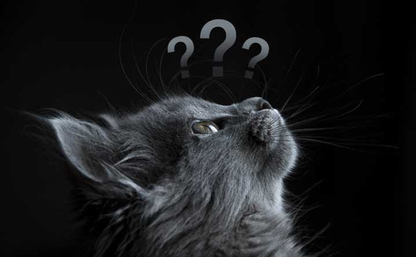 9 Modern Superstitions About Cats