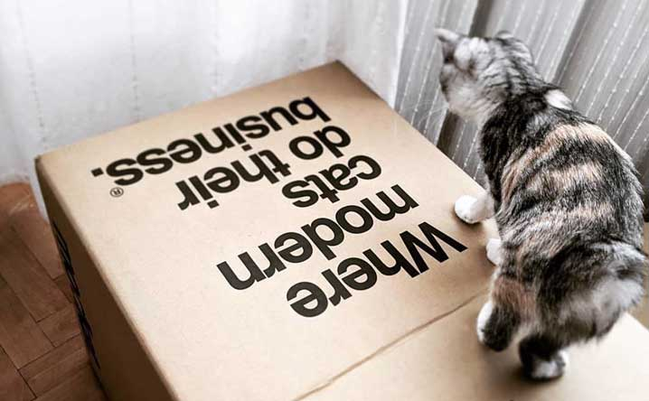 7 Reasons why your cat could be having accidents  - Modkat