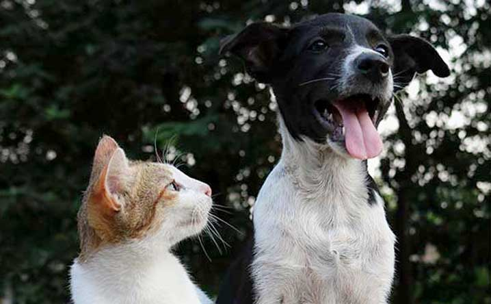 Cat People vs. Dog People: Is There a Difference?