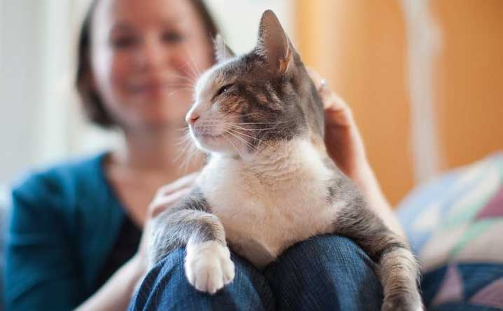 Cats like people (really!), study says.