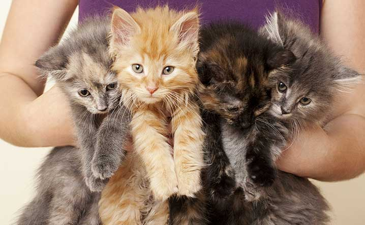 Scientists debunked the crazy cat lady cliché!