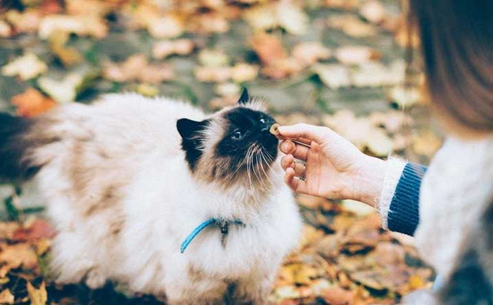 Science proves cats are man's best friends.