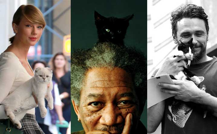 12 Celebrities Who ❤️ Cats!