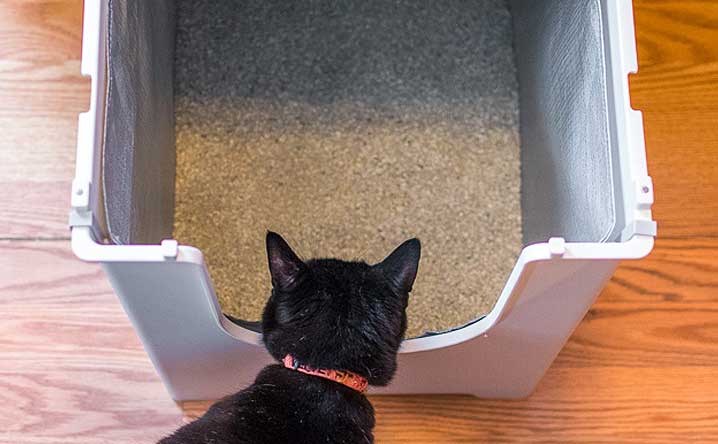 7 tips to make a stinky litter box smell fresh & clean.