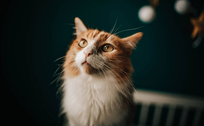 "Do cats love their owners? These 5 studies say ""yes!"""