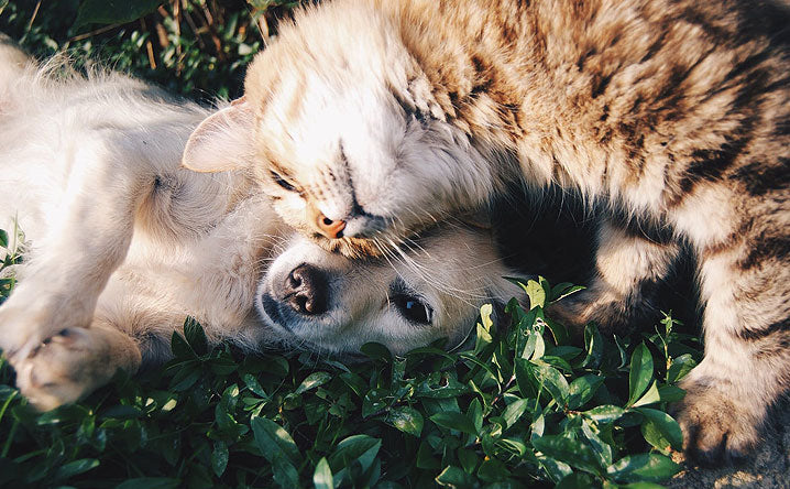 5 Tips to introduce a new cat to your dog.