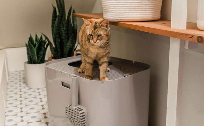 What are the benefits of an enclosed litter box?