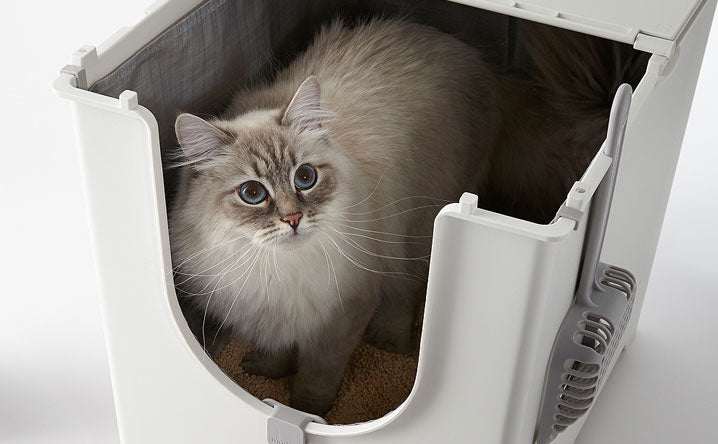 The ultimate guide to flip-top litter boxes.