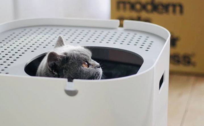 How often do I really need to clean my cat's litter box?