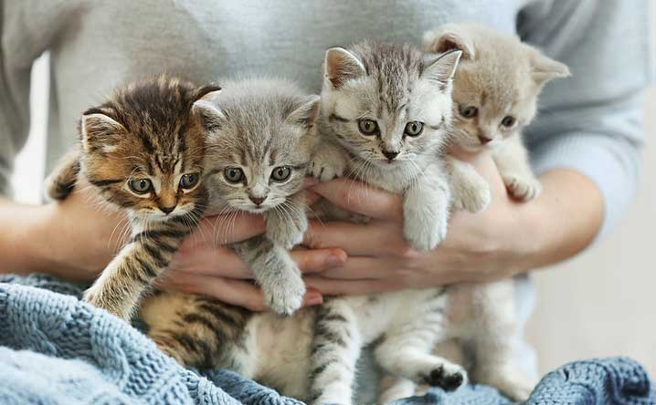 Can a female cat's litter have different fathers? - Modkat