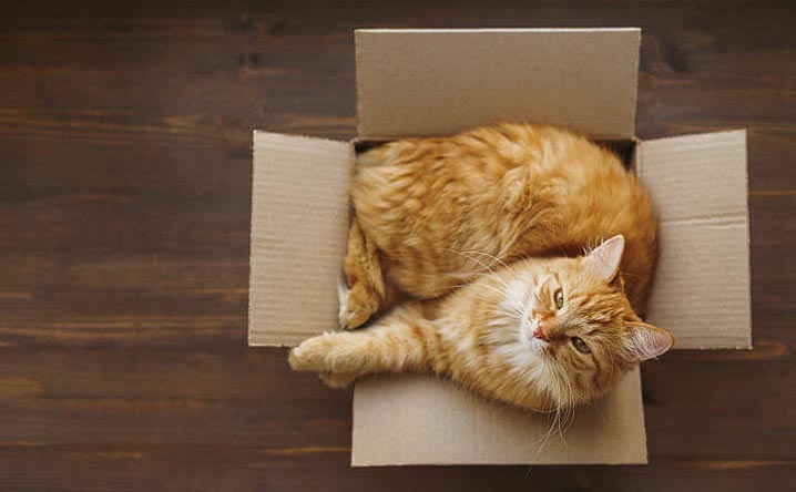 10 tips for moving with your cat.