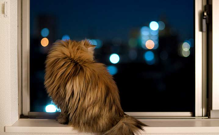 7 tips for quieting night-time meowing.