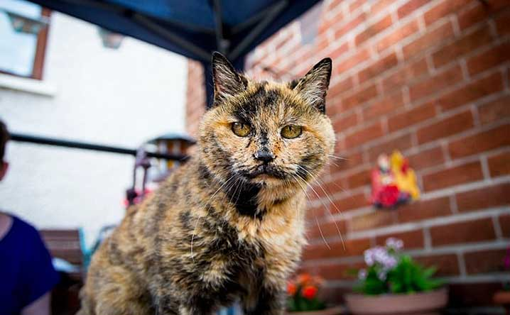 World S Oldest Living Cats How To Tell If Your Cat Will Be One Modkat