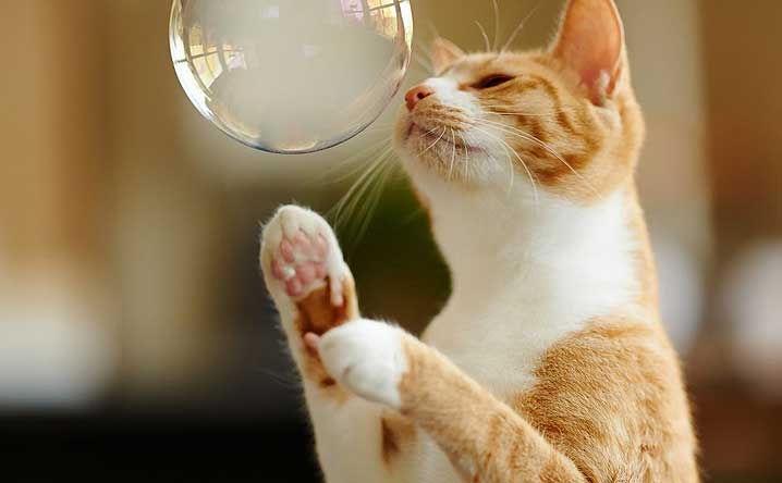 10 fun activities you can do with your cat.