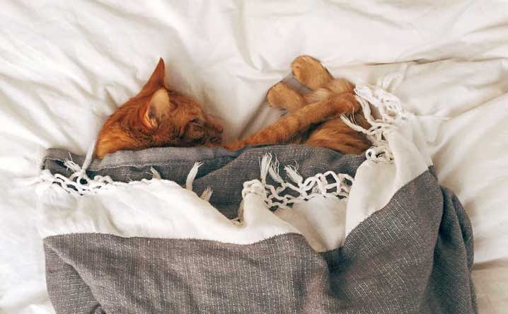 How much do cats sleep, and how many hours do they really need?