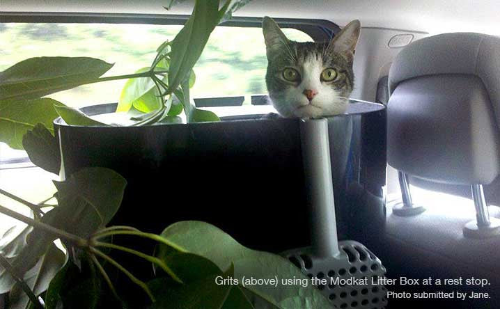 5 Things Nobody Tells You about Traveling with Cats