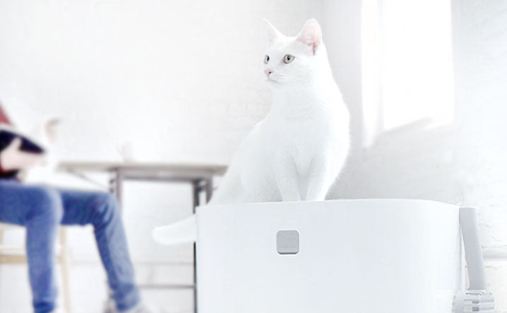 Which Litter Box Is Best for My Cat?