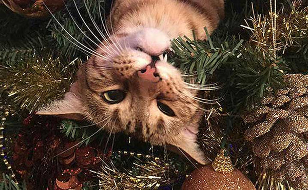 Tips to Keep the Cat Out of the Christmas Tree