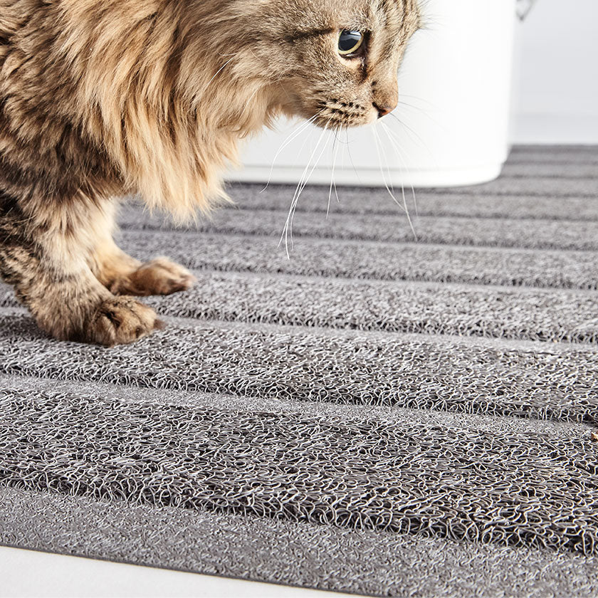 Best Cat Litter Boxes, Modern Mats