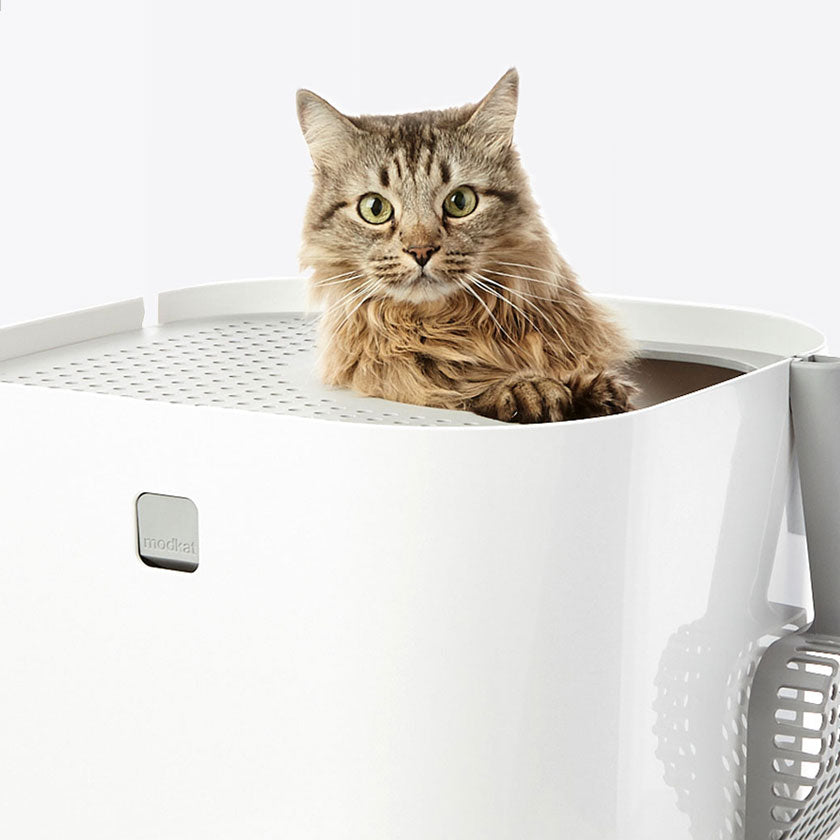 Best Cat Litter Boxes, Modkat