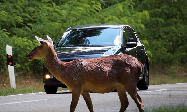 Tips to Avoid Hitting Deer and Reduce Vehicle Damage
