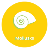 Free from Mollusks