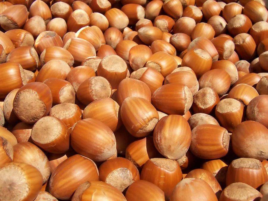 A pile of Hazelnuts