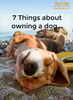 7 Things about owning a dog…
