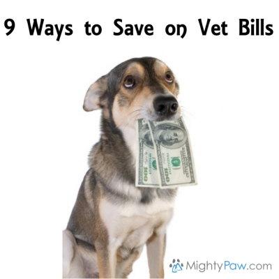 How To Save On Veterinary Bills