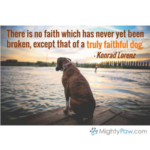 Unbreakable… The Faith of a Dog
