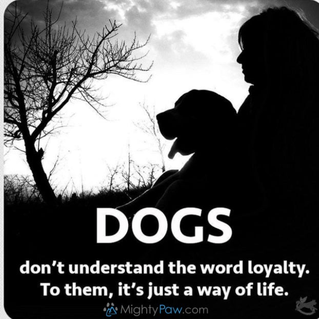 The Loyal Life… Dog's get it