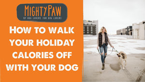 How To Walk Your Holiday Calories Off With Your Dog!