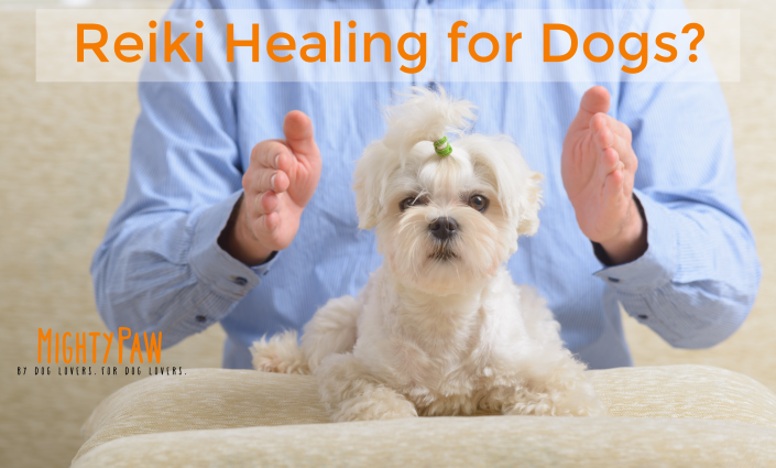 Reiki Healing For Dogs?
