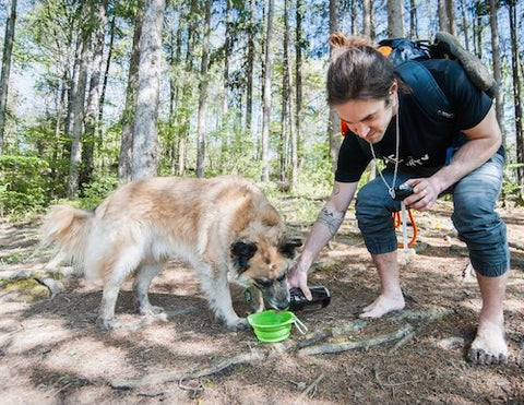 Baloo takes a refreshing sip of water from the Mighty Paw Collapsible Travel Dog Bowl