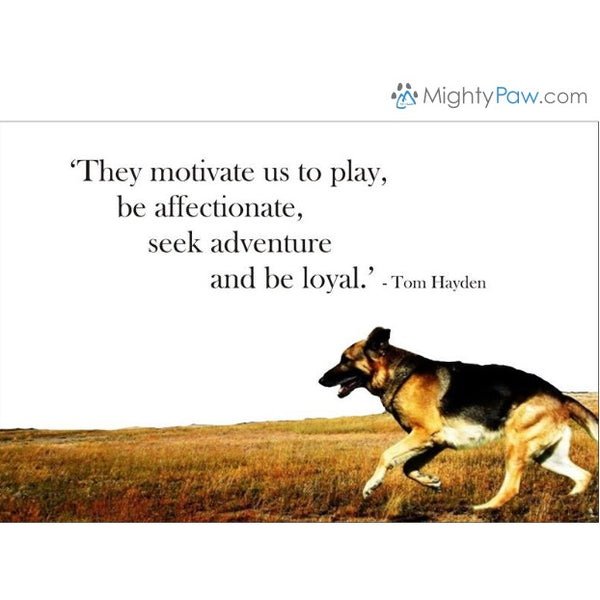 Dog's... They Bring Out The Best In Us