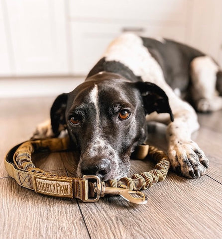 Dog photograhpy tips - get down on the ground to be at your dog's level