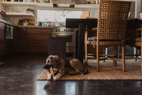 Dog photography - Faster shutter speed with DSLR helps freeze action