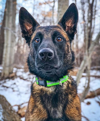 Dog photography tips - Focus on your dog's eyes to caption their personality