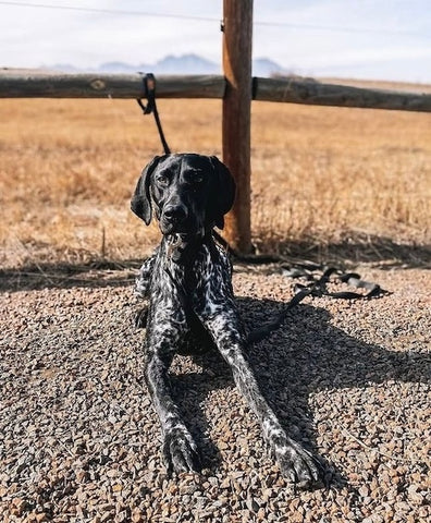 Essential Dog Hiking Gear from Mighty Paw: Long Dog Leash