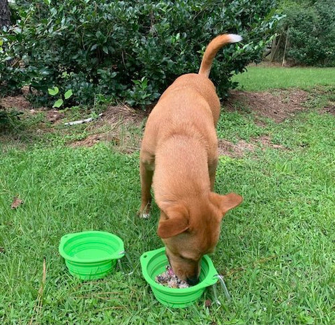 Food and dog food for Wally out of Mighty Paw's collapsible travel dog bowls