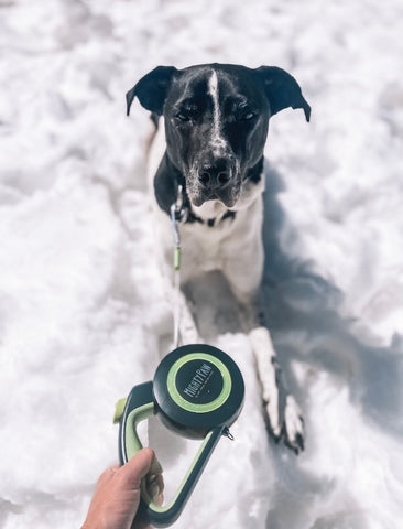 """Practicing the """"stay"""" command with Mighty Paw's Retractable Dog Leash 2.0"""