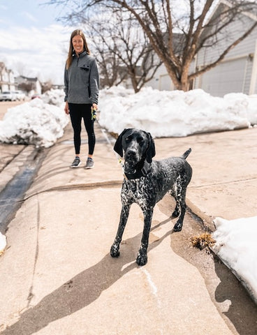 Walking a German Shorthaired Pointer on Mighty Paw's Retractable Dog Leash 2.0
