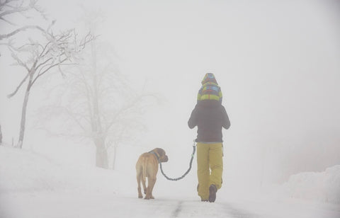 Walking a large dog in the snow on the Mighty Paw Hands-Free Bungee Leash Set