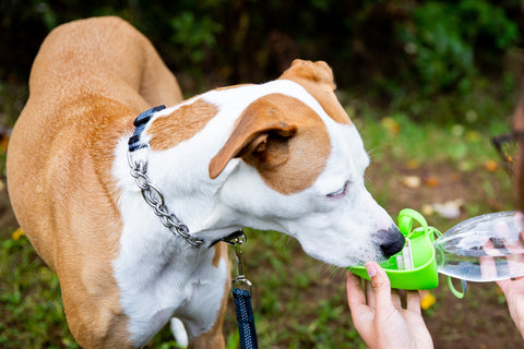 Mighty Paw Travel Dog Water Bottle