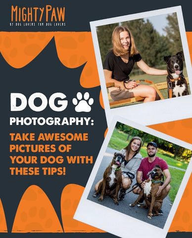 Mighty Paw Blog: Dog Photography - Take awesome pictures of your dog with these tips