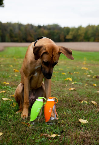 Mighty Paw's Travel Dog Water Bottle Comes in Orange and Green
