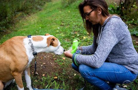The Mighty Paw Travel Dog Water Bottle features a silicone leaf that can be flipped over and turned into a bowl